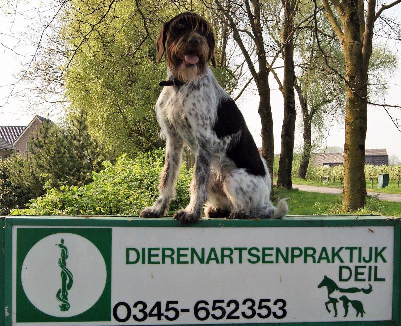 Reizen met uw huisdier