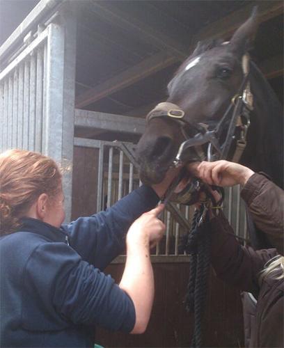 Gebitsverzorging bij paard