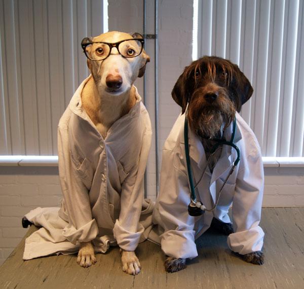 Chirurgie operaties huisdieren gezelschapsdieren