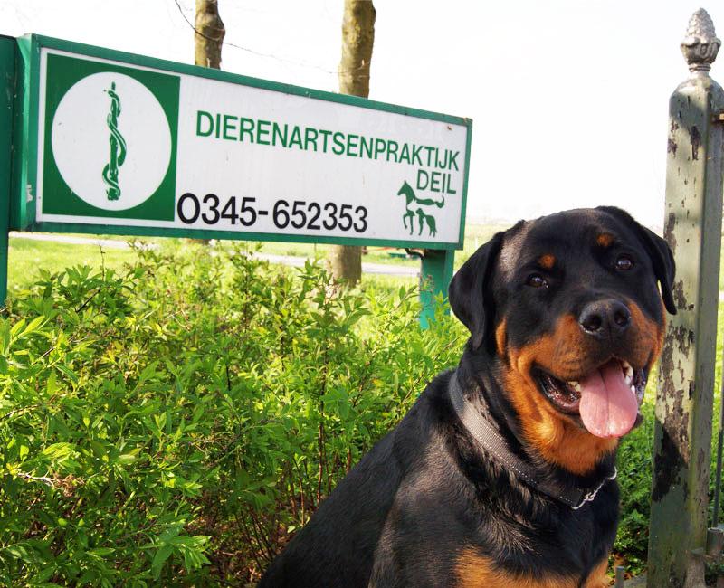ontwormen van huisdieren en gezelschapsdieren